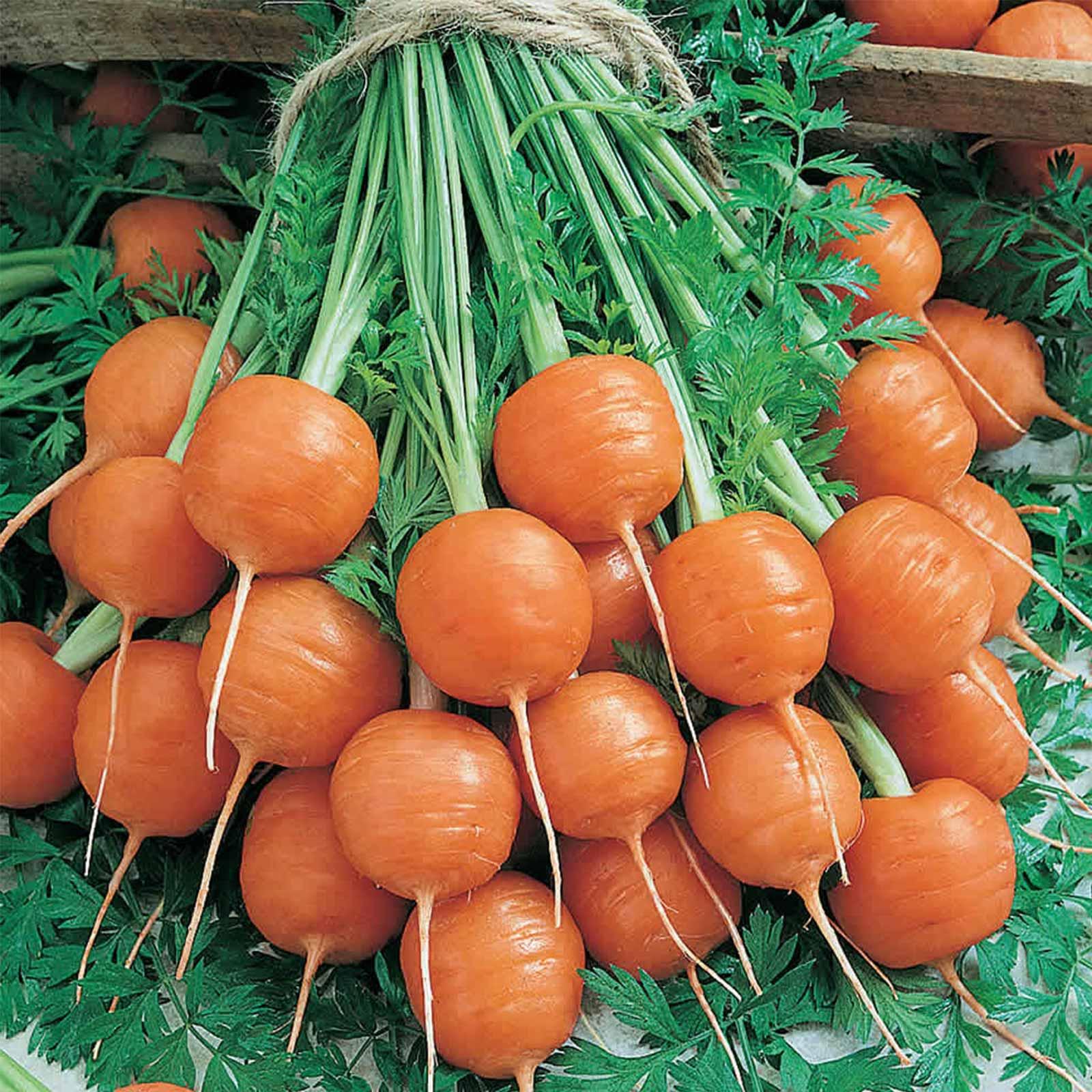 Parisian Carrot Seeds 1 Lb NonGMO Heirloom Vegetable Garden