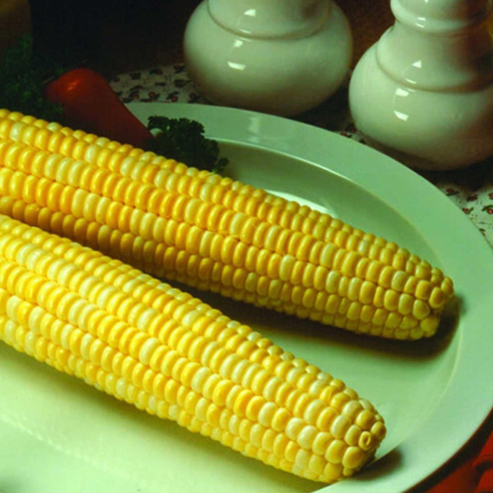 KANDY KORN HYBRID CORN GARDEN SEEDS NON-GMO VEGETABLE GARDENING YELLOW SWEET