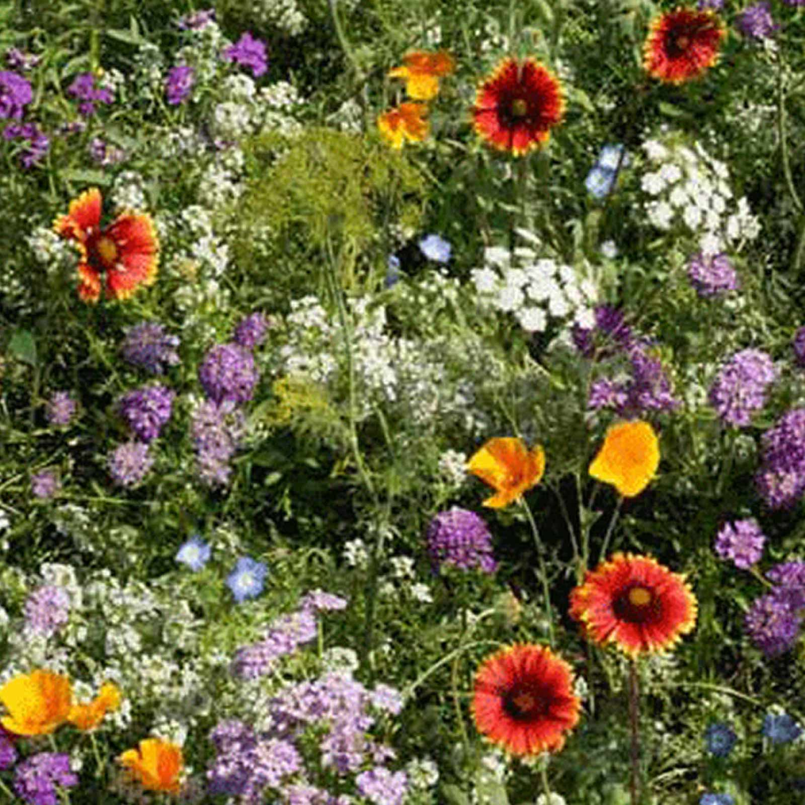 Low Growing Wildflower Seed Mix 4 Oz Mix Of Annual Perennial