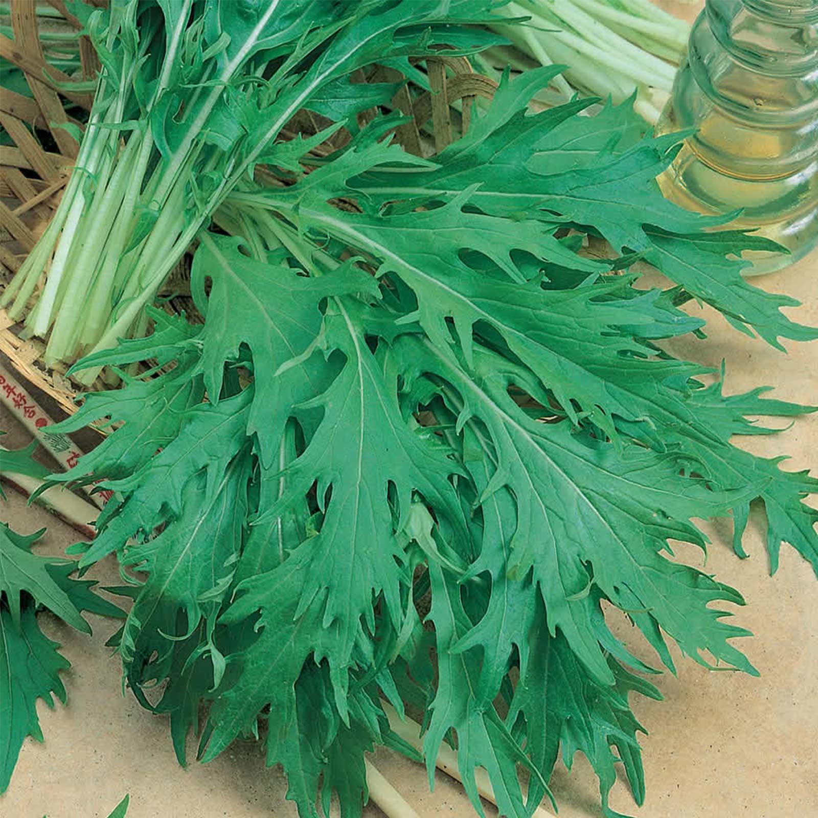Japanese MustardOriental Vegetable Organic Green Mizuna Microgreen Seeds