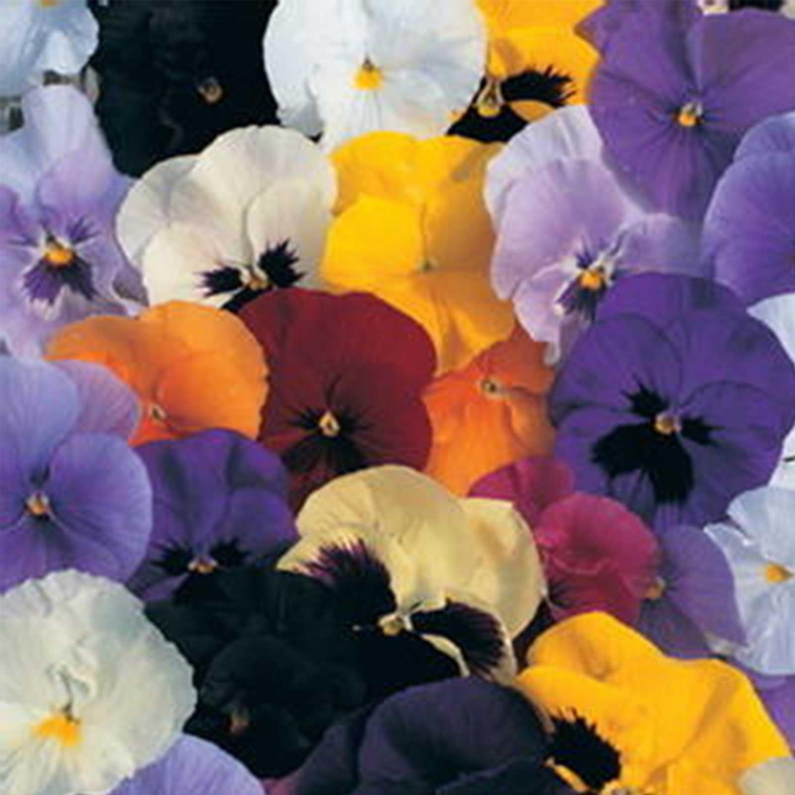 Pansy Flower Garden Seeds Delta Premium Color Mix Annual Gardening