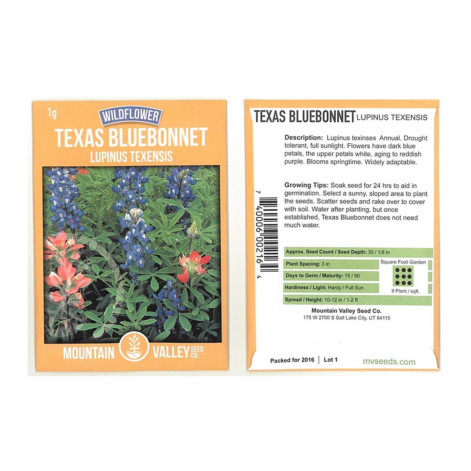 Lupine Flower Garden Seeds Texas Blue Bonnet 1 G Bluebonnet