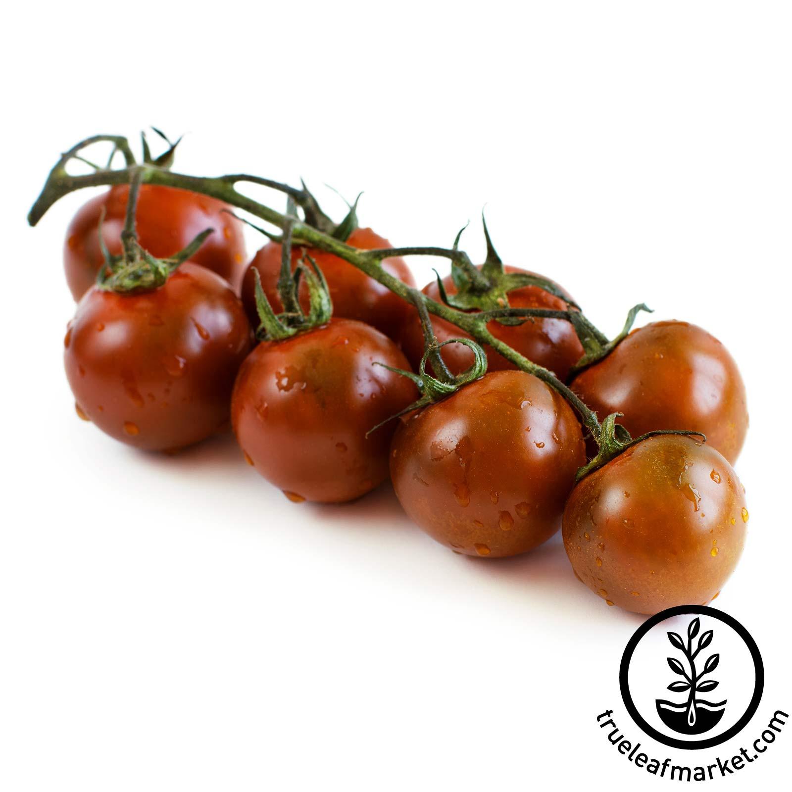 Tomato Garden Seeds – Chocolate Cherry – 250 mg Packet – Non-GMO ...