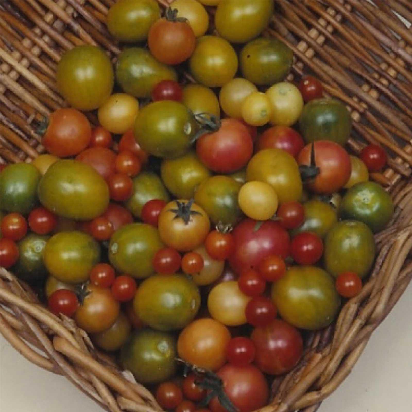 Tomato Garden Seeds – Rainbow Cherry – 1 Oz – Organic, Vegetable ...